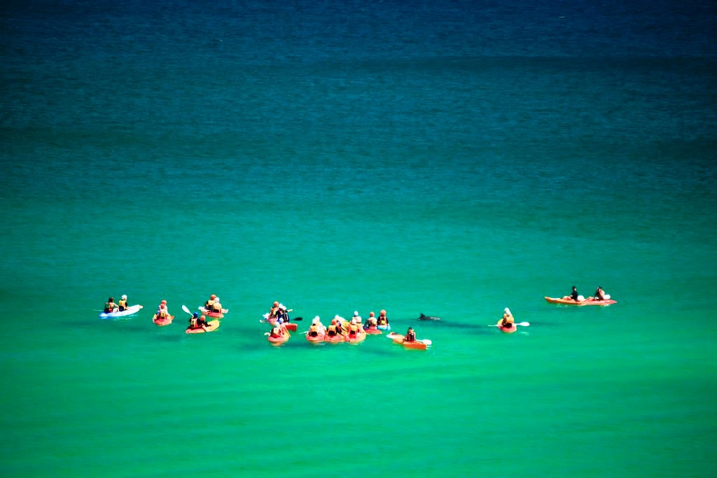 dolphin interactions in byron bay