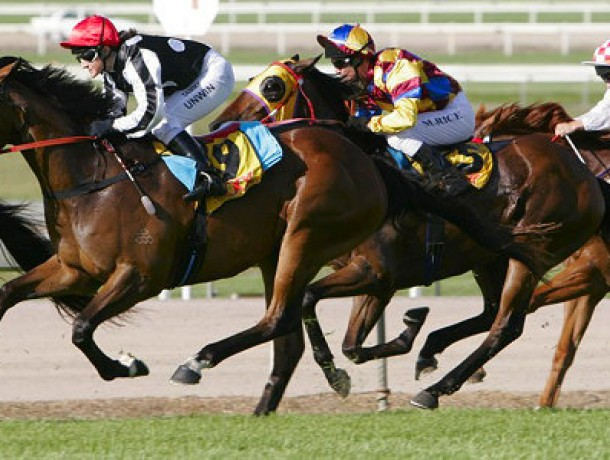 Sunshine Coast Cup Race - An annual event