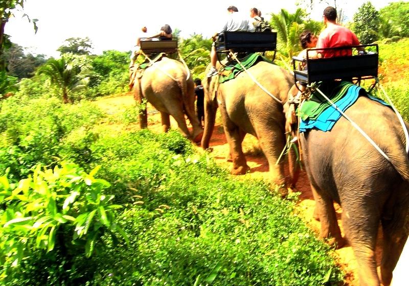 Eco Tour Elephant Safari in Koh Samui