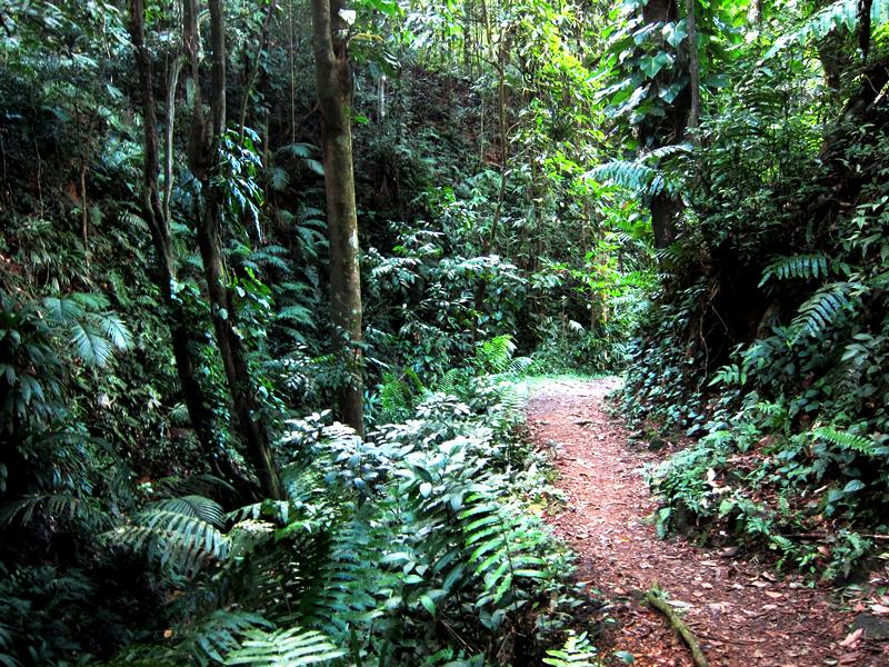 Tropical Forest Hiking in Koh Samui