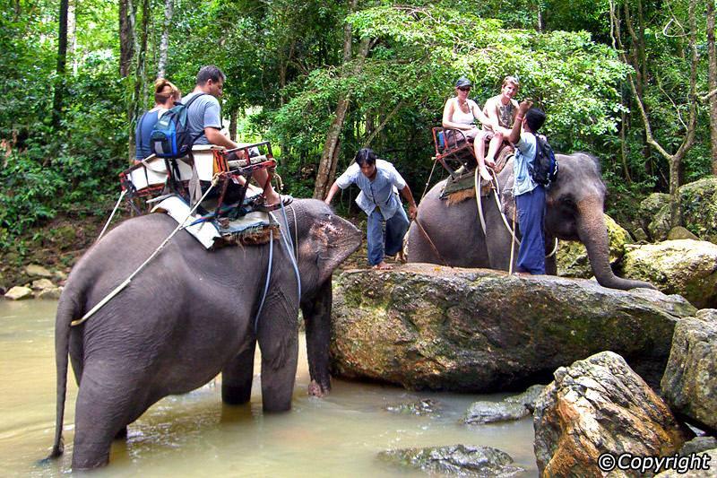 elephant-trek-800