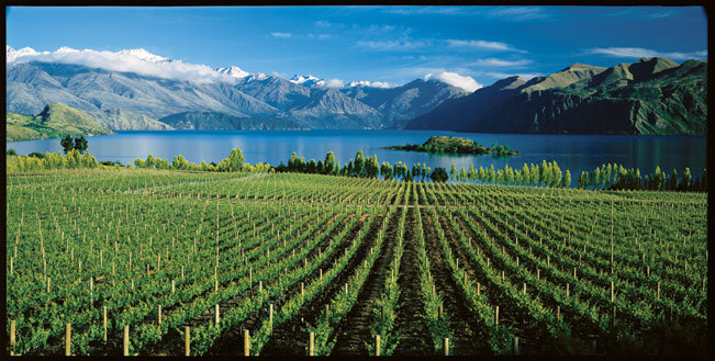 Wanaka Villa 631 - property has vineyards sweeping down to the lake, and yet more majestic mountains forming the backdrop to the spectacular view.