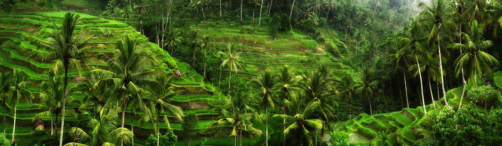 Visit Ubud Bali in 2020